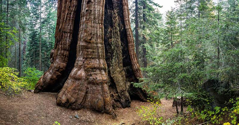world's largest sequoia forest