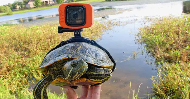 turtle with gopro